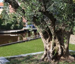 Lavendel-tuinvoorbeeld