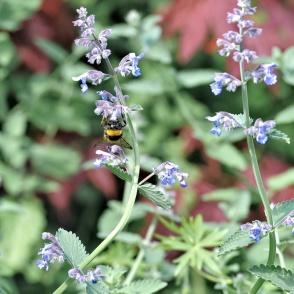 Duurzaam tuinieren | Catalpatuinen